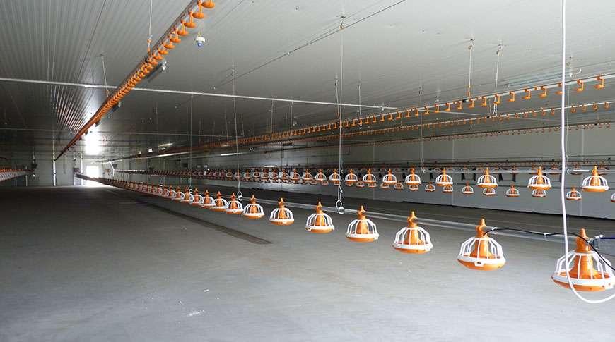 chicken farms breed industrial metal PEB halls